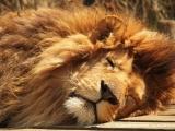 BERNHARD Denise - Le roi de la sieste.jpg