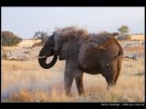 HOELLINGER Sabine - Expo 2018 - Papier 1 - Fallait pas m'énerver ! (Namibie)