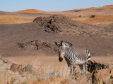 HOELLINGER Sabine - Expo 2018 - Projection 4 - En pyjama dans le désert du Kalahari