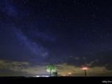 Milky Tree.jpg
