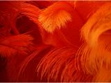 049 Hunsinger Mireille - Plumes de feu