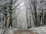 RAULIN Jean-Marie - Expo 2017 - Projection 2 - Col de Saverne en hiver