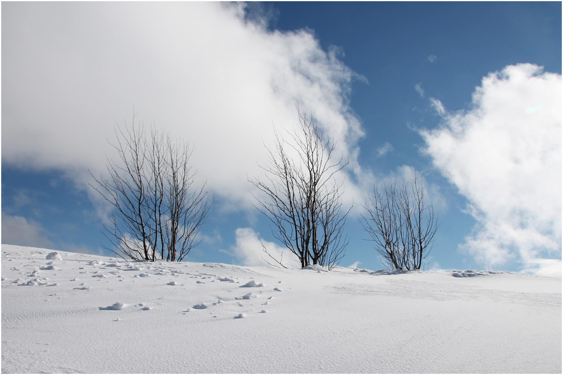 006 Adam Laetitia - Isolement hivernal