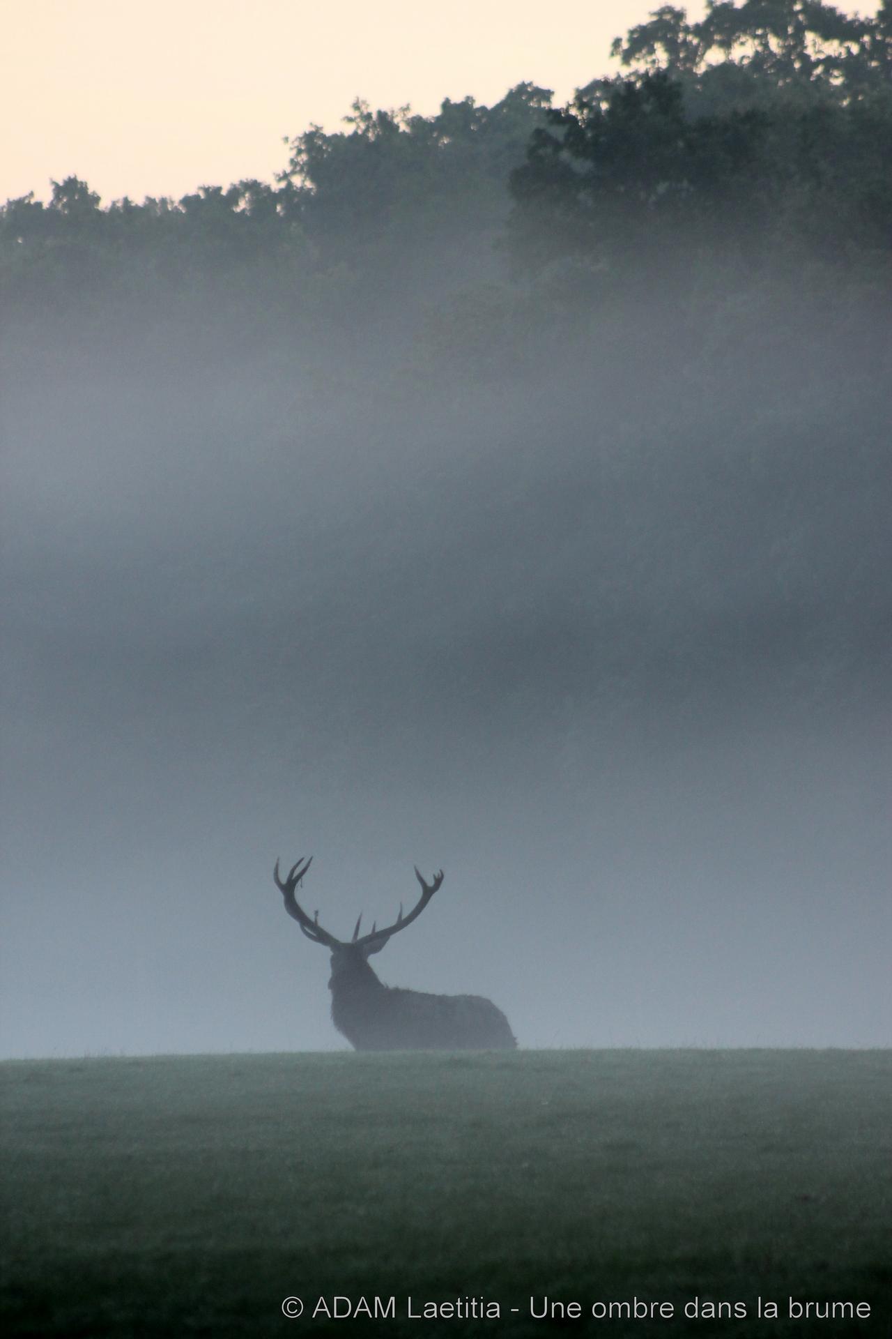 ADAM - Une ombre dans la brume (-)