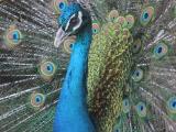 ADAM - Regard bleuté (-)