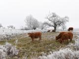 BAUER Jean-Maurice - Expo 2017 - Papier 2 - Habits d'hiver