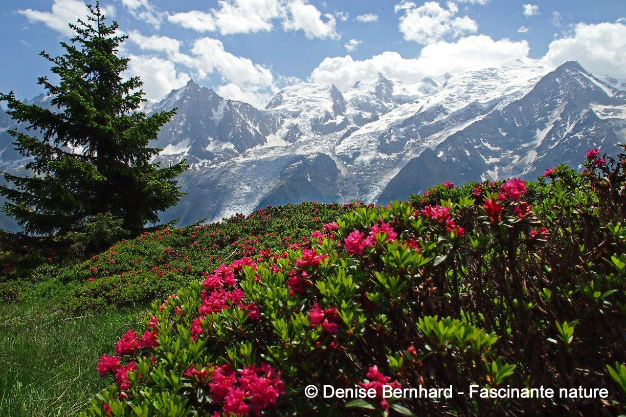 BERNHARD Denise - Fascinante nature.jpg