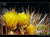 DEBES Adeline - Expo 2018 - Papier 2 - Fleur de cactus