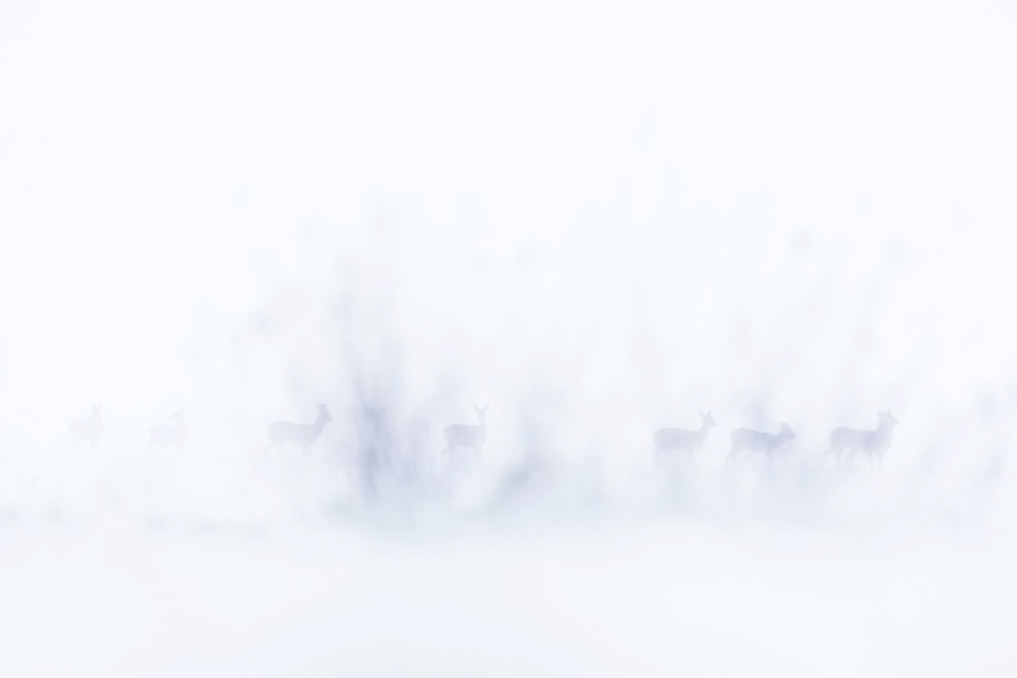 HEN-Marc-Expo-2019-Papier-1-En-pleine-tempête