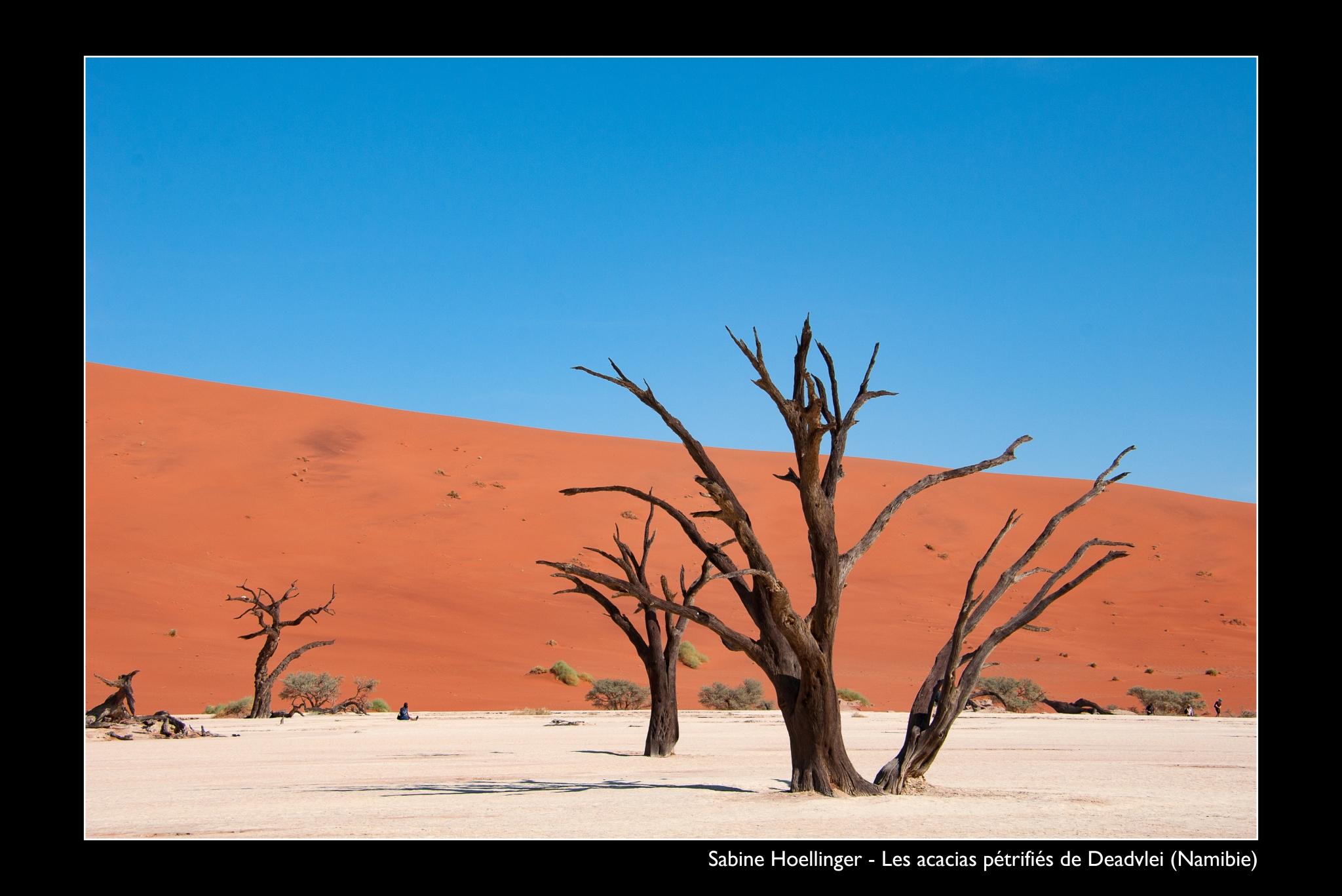 HOELLINGER Sabine - Expo 2018 - Papier 3 - Les acacias pétrifiés de Deadvlei (Namibie)