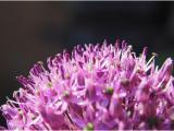 069 Munsch Claude - Ail floral
